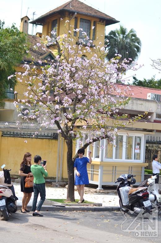 Phía đường Hoàng Diệu chỉ còn 1 - 2 cây nhỏ ở ngoài là có thể chụp ảnh.