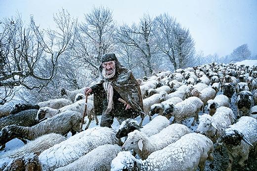 Một ông già chăn cừu đang vô cùng ngạc nhiên trước cơn bão tuyết ở ngoại ô Gilan – phía Bắc Iran.