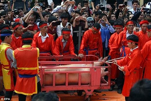 Lam Trường lên tiếng bức xúc về lễ hội chém lợn truyền thống man rợ - Tin sao Viet - Tin tuc sao Viet - Scandal sao Viet - Tin tuc cua Sao - Tin cua Sao