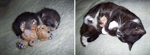 Chú gấu nhồi bông vẫn vậy, nhưng chú mèo thì đã khác.