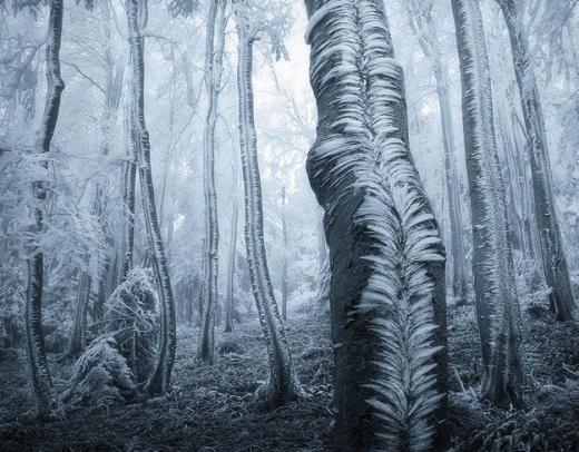 Rừng bị đóng băng ở núi Beskydy, CH Séc.