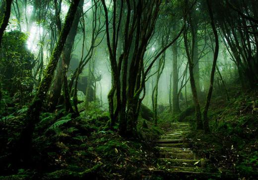 Con đường phủ đầy rêu xanh ở rừng quốc gia Taipingshan, Đài Loan.
