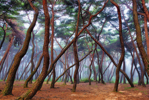 Khu rừng của những loài cây có dáng thân cong vẹo kỳ lạ.