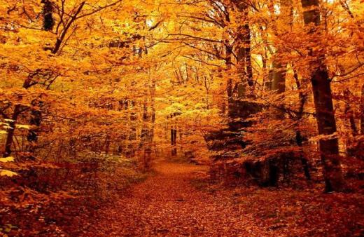 Màu vàng cam sáng rực của khu rừng ở Latvia mùa lá rụng.
