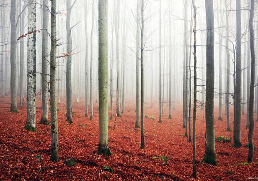 Một cảnh đẹp ở Bavaria, Đức.