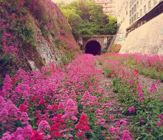 Một đoạn đường sắt bị bỏ hoang ở Pháp từ năm 1934, nay hoa đã mọc rợp kín.
