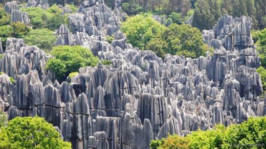 Thạch Lâm, hay Rừng đá, là một khu rừng đá vôi tự nhiên ở Vân Nam, Trung Quốc. Khu vực này được UNESCO công nhận là di sản thế giới, với những khối đá cao đến 10 m. Rừng đá có từ khoảng 270 triệu năm trước, tại nơi từng là một vùng biển nông. Đá vôi và sa thạch tích tụ tại đây và nhô dần lên cao. Hình dáng của chúng hình thành dưới tác động của gió và nước. Ảnh: Udayan Dasgupta