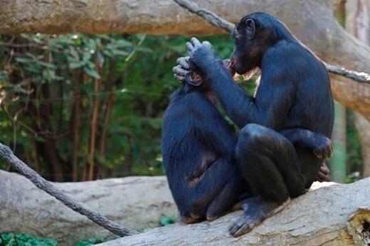 Bất ngờ với tình cảm mãnh liệt động vật dành cho nhau
