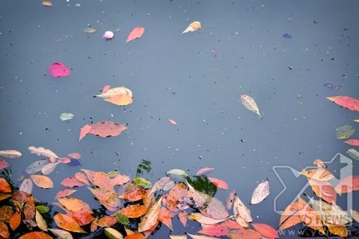 Ngắm nhìn một Hà Nội lãng mạn, chuyển mình nhẹ nhàng mùa thay lá