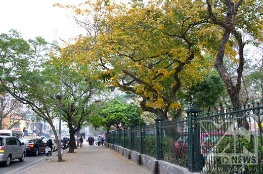 Lác đác bao quanh Văn Miếu là một màu lá vàng điểm xuyết trong không gian