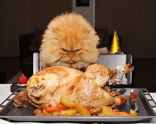 Nó đang định xơi tái con gà trước mặt hay tôi vậy?