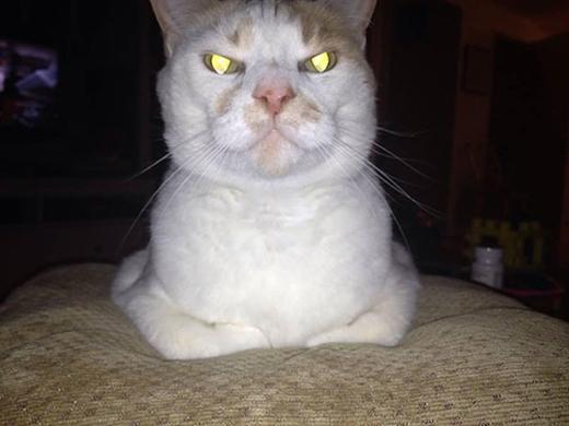 Khi các chú mèo sẽ khiến bạn phải giật mình chết khiếp