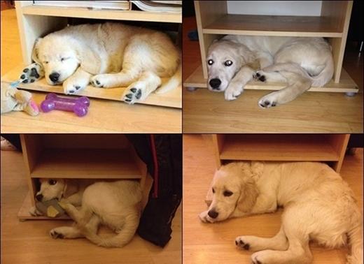 Những năm sau, góc tủ này vẫn là chốn nằm yêu thích của chú chó.