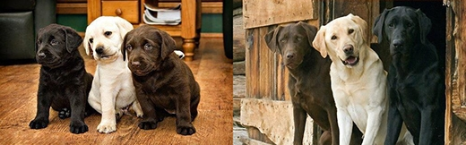Những bức ảnh ấn tượng Ngày ấy - Bây giờ của các chú chó