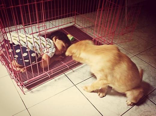 Tụi nó còn tranh chỗ ngủ của chó cưng