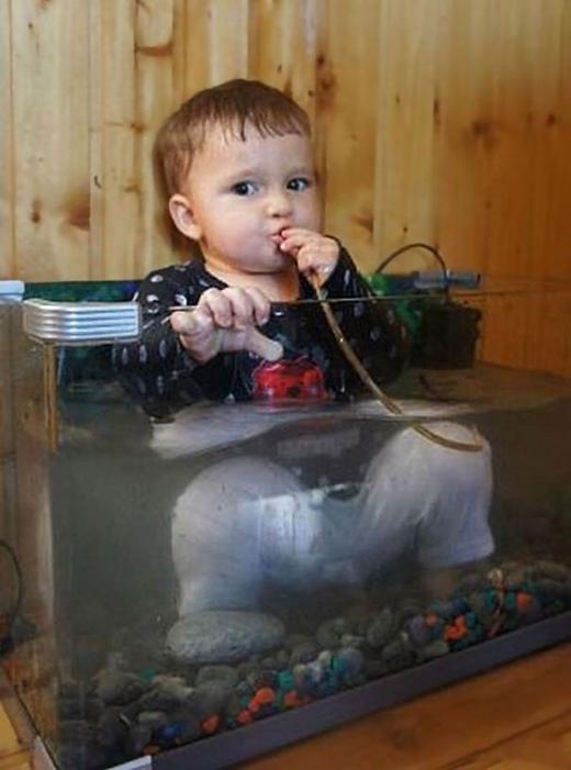 Chúng sẽ xem bể cá mát lạnh như biển mùa hè
