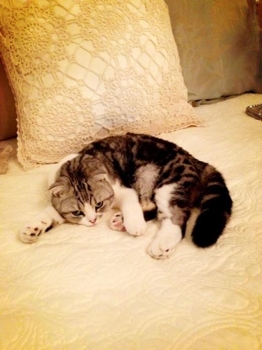 Taylor Swift bị mèo cưng phá hỏng đôi chân 850 tỷ đồng