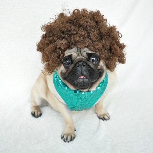 Gặp gỡ chú chó sở hữu phong cách thời trang có một không hai