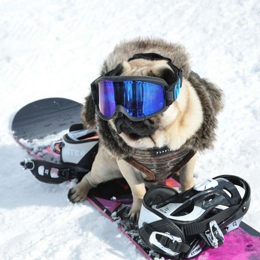 Đi trượt tuyết cũng phải thật phong cách mới được.
