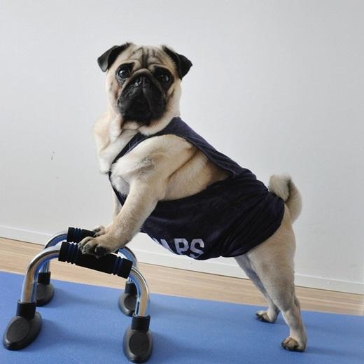 Lâu lâu cũng phải tập tí thể dục thể thao!