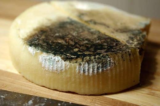 Thoa một chút bơ lên phần rìa của miếng phô mát ăn dở sẽ giúp bảo quản miếng phô mát lâu hư hơn.