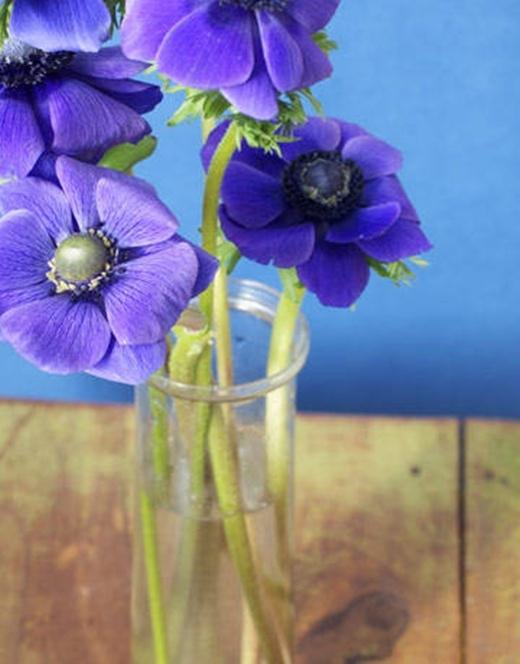 Bạn có thể bỏ một vài giọt vodka và một thìa đường vào bình bông để giữ hoa tươi lâu hơn.