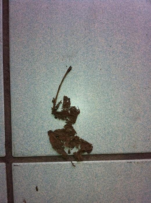 17. Ninja lá khô này hoàn toàn có thể tóm được bạn.