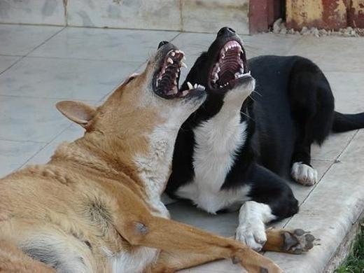 Ở Oklahoma, một tiểu bang ở nước Mỹ, bạn có thể bị bắt vào tù nếu… làm mặt xấu với những chú chó.
