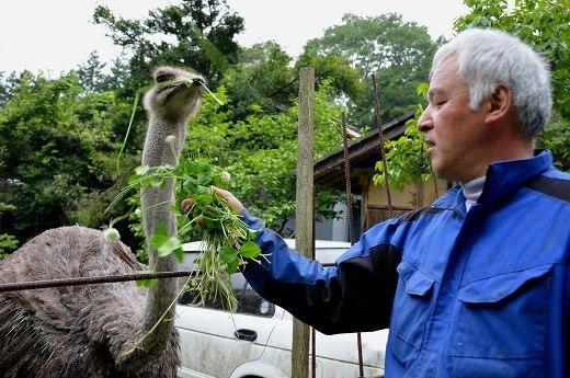 Cảm phục người đàn ông tình nguyện chăm sóc cho động vật bất chấp phóng xạ