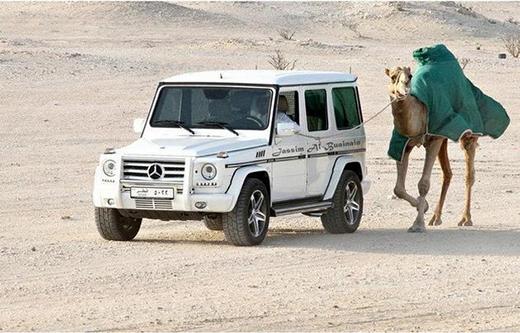 Vầy có phải là lạc đà sẽ đi nhanh hơn không?