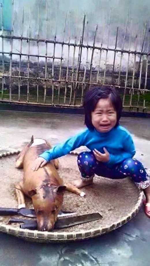 Câu chuyện cảm động đằng sau bức ảnh Bé gái khóc bên chú chó bị làm thịt