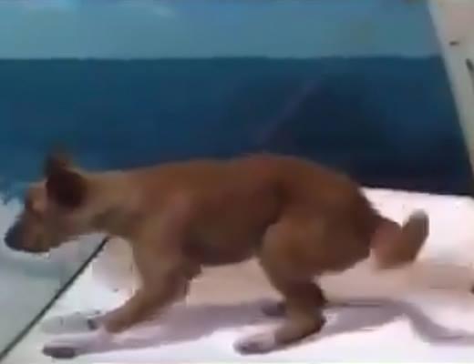 Chú chó rớt xuống biển.