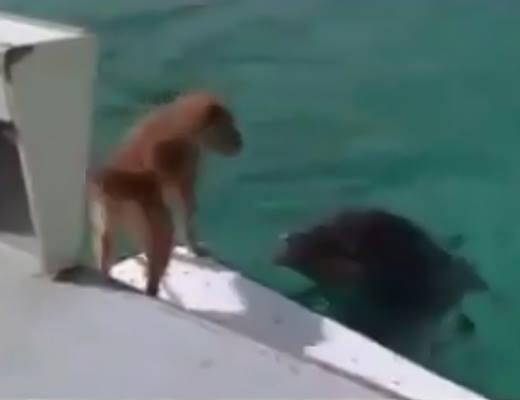 Chú chó đã được lên thuyền thành công.