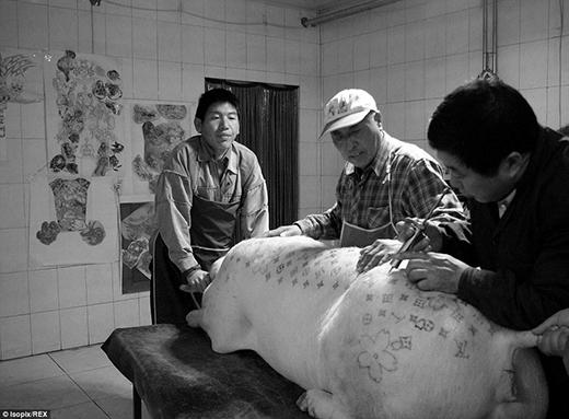 Các chú heo sẽ được gây tê trước khi xăm. Sau đó, chú ta sẽ được xăm bởi cùng lúc 3 nghệ sỹ. Trong quá trình xăm, đội ngũ nhân viên sẽ liên tục xức kem lên da của các chú lợn.