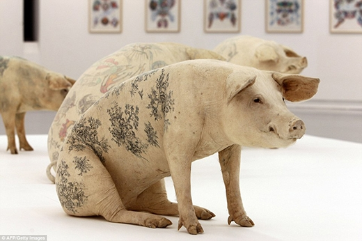 Kỳ lạ nghệ thuật xăm hình trên lợn mang lại tiền tỷ