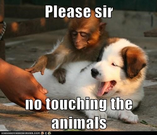 Xin vui lòng đừng chạm vào động vật