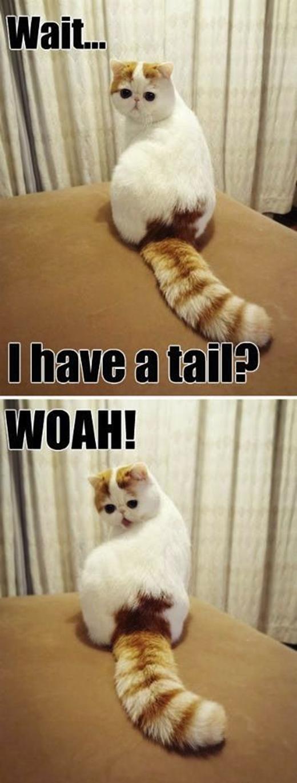 Chờ đã!!! Tôi có đuôi ư??? Thật kì diệu