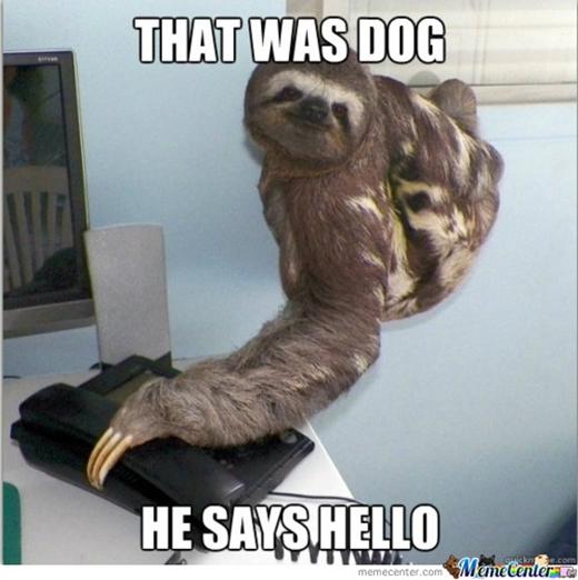 Chỉ là một con chó. Nó gửi lời chào thôi