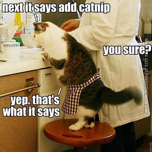 Phụ bếp thật dễ thương và chuyên nghiệp.