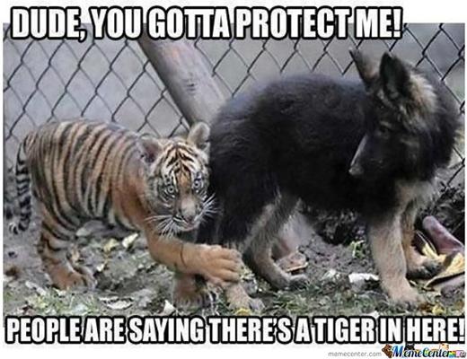 Anh trai, bảo vệ em đi. Em nghe mọi người nói rằng có một con hổ ở gần đây!!!