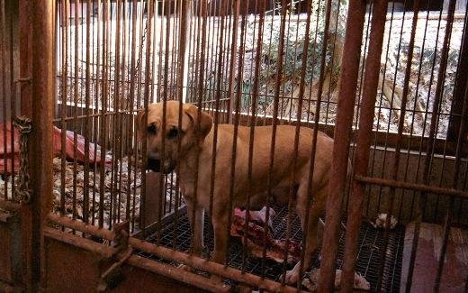 Xúc động chùm ảnh 57 chú chó được giải cứu từ trại nuôi lấy thịt