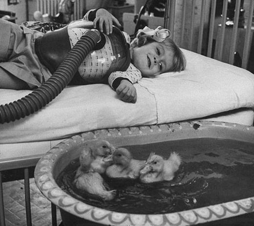 Động vật được dùng như là một liệu pháp chữa bệnh vào năm 1956.
