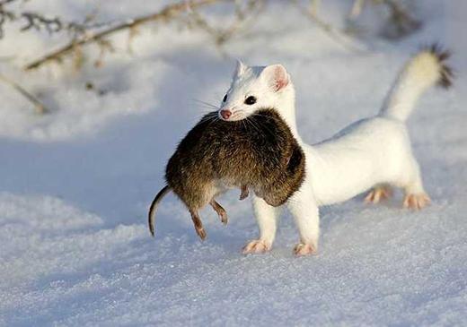 5 loài động vật siêu đáng yêu chỉ có thể tìm thấy ở Nhật Bản