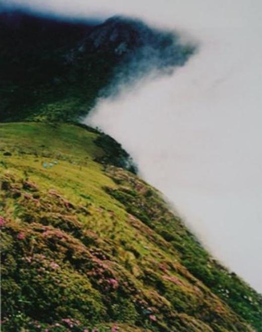 Màn sương được cho là nguyên nhân của mọi hiện tượng bí ẩn và sự mất tích diễn ra ở đây.