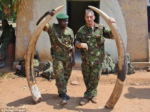 Trên chợ đen Châu Á, một chiếc ngà voi có thể được bán với giá từ 400 trăm triệu cho đến hơn 3 tỉ tùy thuộc vào kích thước và khối lượng của chúng.