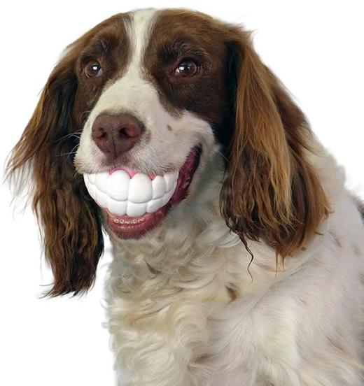 Khuôn mặt ngộ nghĩnh của các chú chó khi được gắn... đồ chơi