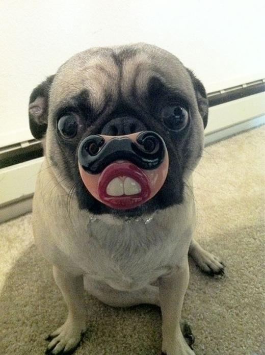 Cái này người ta gọi là Răng thỏ.