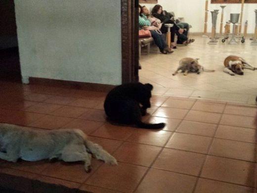 Đàn chó hoang đến đưa tang ân nhân gây xúc động