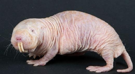 Rùng mình trước 10 loài động vật đáng sợ trên thế giới