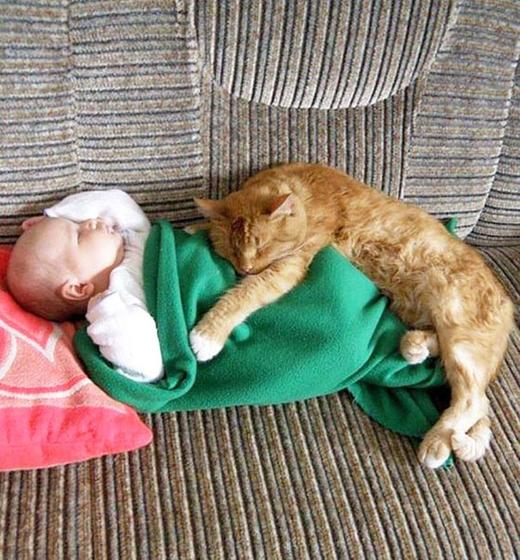 Có vẻ chú mèo này đã tìm được nơi ngủ êm ái nhất rồi.